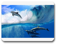 delfines-nadando-en-el-mar-dolphins-swimming-1920x1200-wallpaper_all